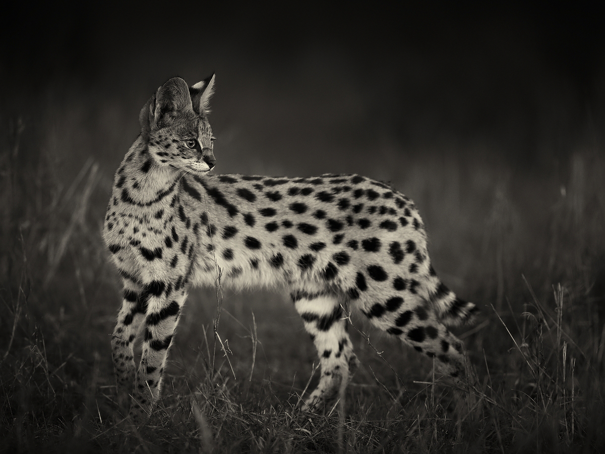 bwserval