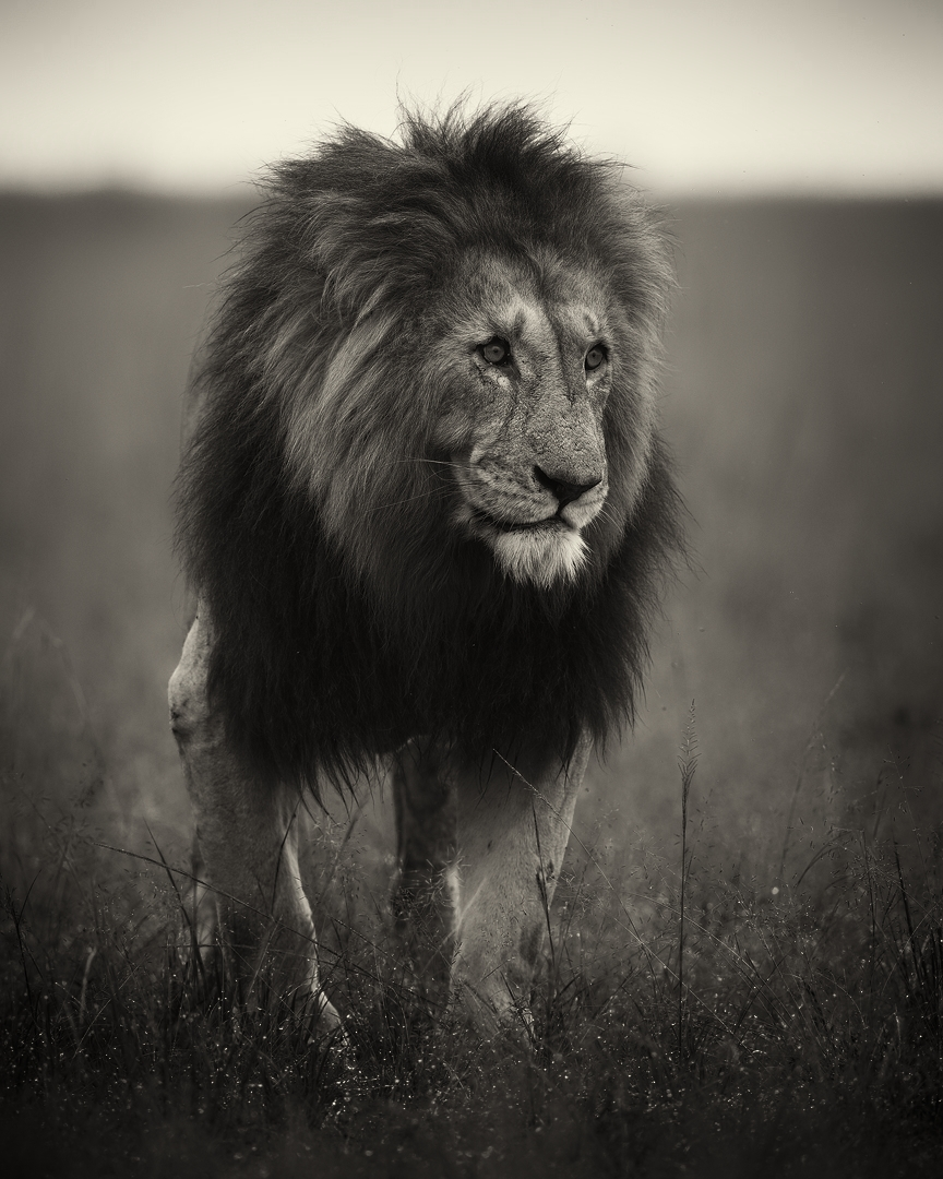 KING OF THE MARA